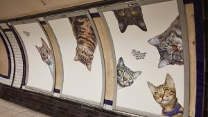 chat-cats-metro-station-londres-1
