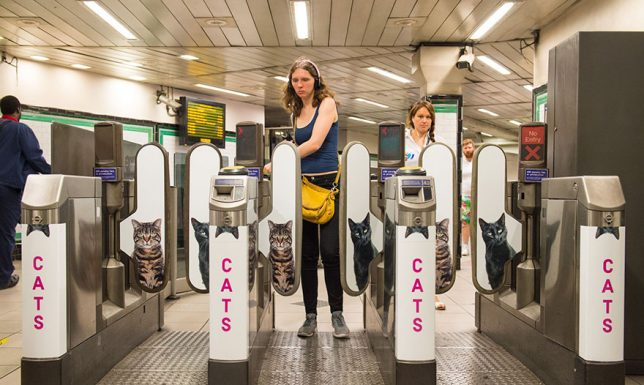 chat-cats-metro-station-londres-2
