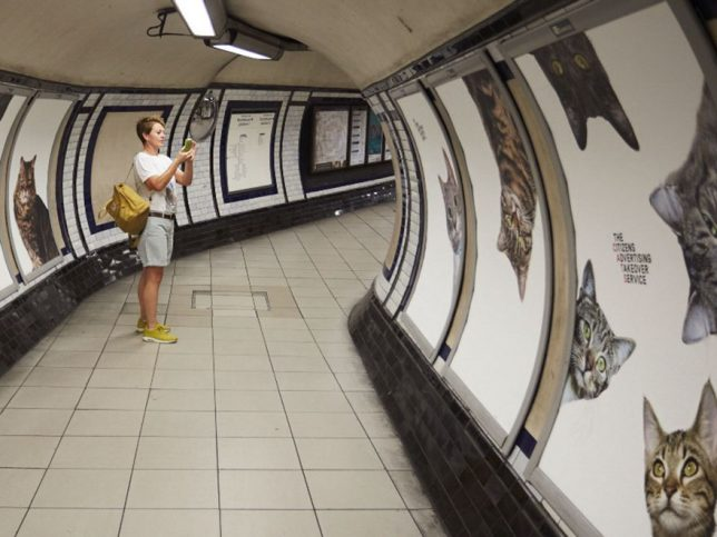 chat-cats-metro-station-londres-3