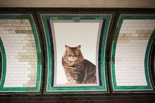 chat-cats-metro-station-londres-5