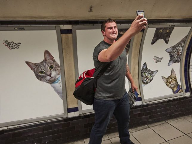 chat-cats-metro-station-londres-6