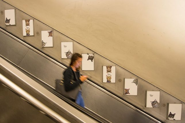 chat-cats-metro-station-londres-7